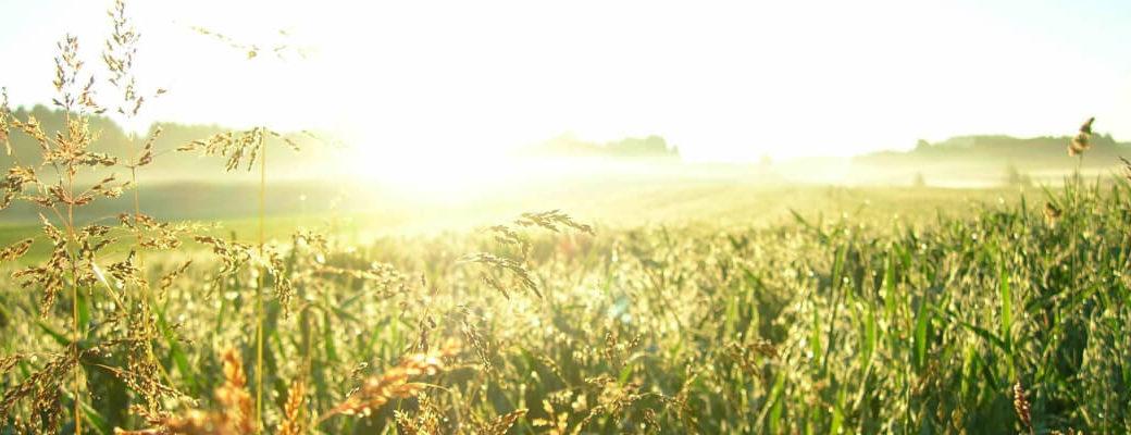 Spiritquelle Berichte Gedanken zu Spiritualität, Lebensthemen